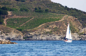 Vigneti in Sardegna