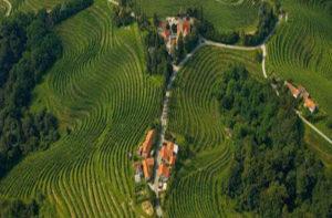 Vigneti in Slovenia