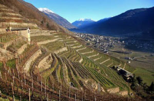 Vigneti in Valtellina