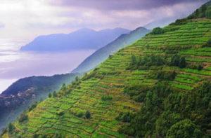 Viticoltura eroica nelle Cinque Terre